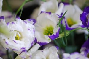 spring 040