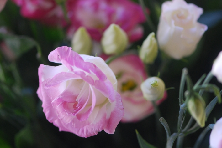 Lisianthus, white with a pink edge.