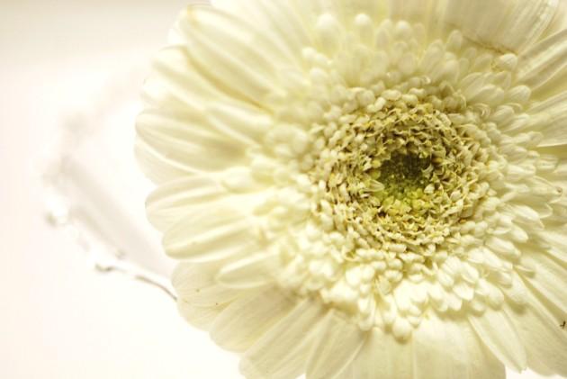 whitewedding1 119.JPG
