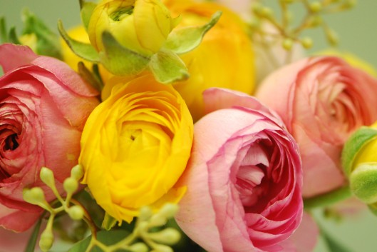 Ranunculus - assorted spring colors