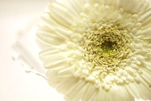 whitewedding1 119