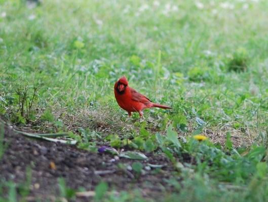 Roberts Birds 064
