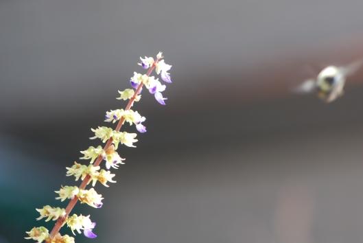 Bee Incoming