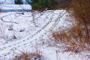 SnowyFootprints