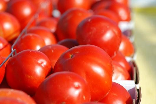 FarmTomatoes1