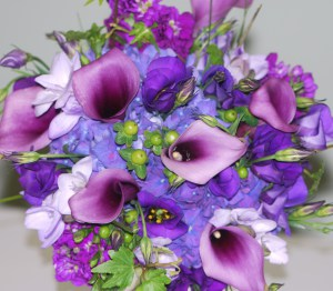 purple-006