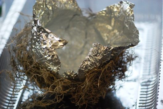 Nest Alum Removed