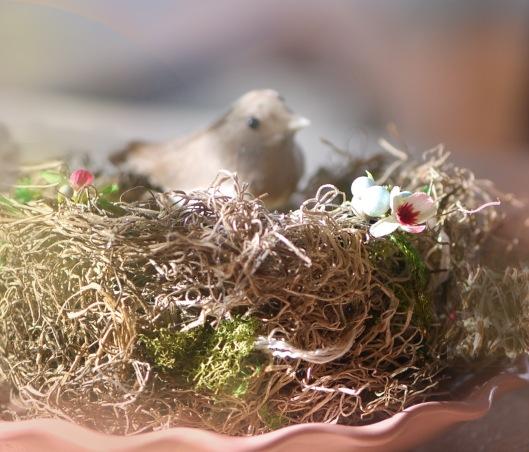 Nest in Sunshine