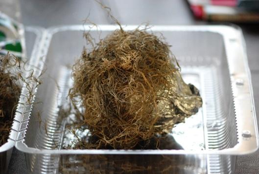 Nest More Moss