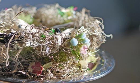 Nest with 2 birds